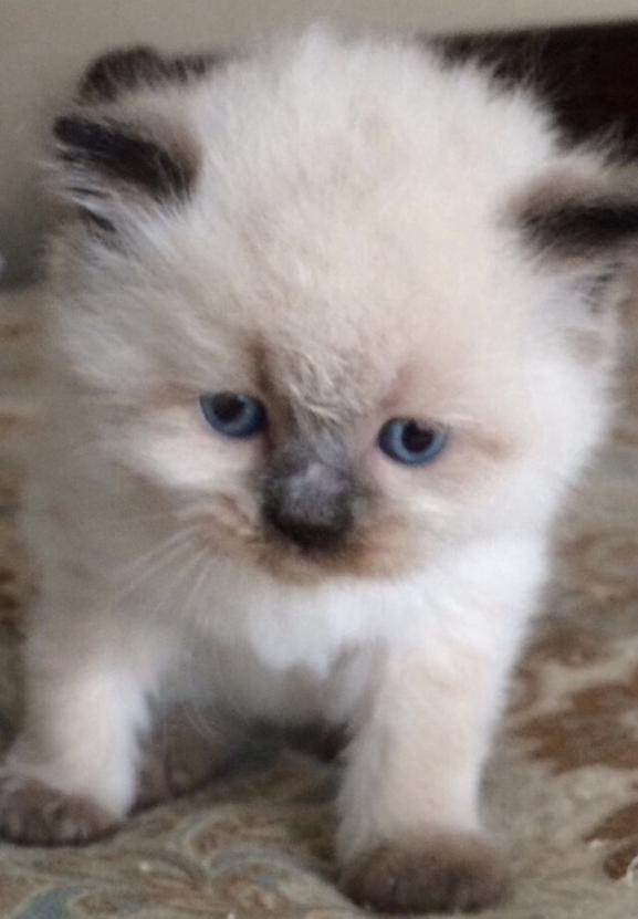 Khloe's Kittens
